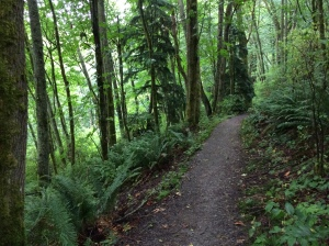 Emily_Downward_Coaching-pic of Seattle forest